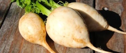 Recipe: Pickled Hakurei Turnips
