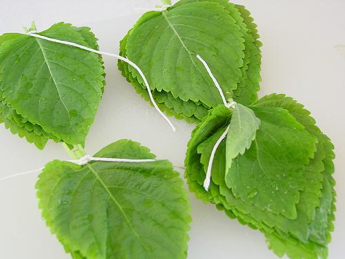 Kkaenip (perilla leaf)